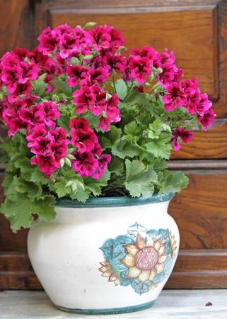 petunias: pink petunias in rustic pot