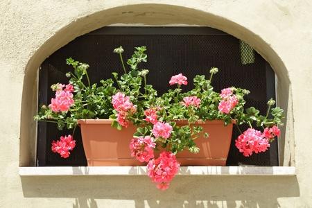 niche: geranium in box put in niche on wall
