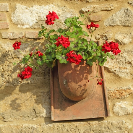 geranium color: red geranium in rustic pot on stone wall, Tuscany, Italy