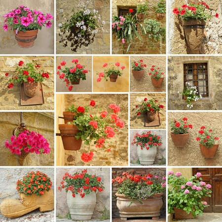 collage with images of flowerpots with geranium , petunias,cacti, impatiens and hortensia flowers, Italy photo