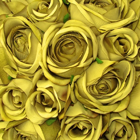 yellow rose pattern                      photo