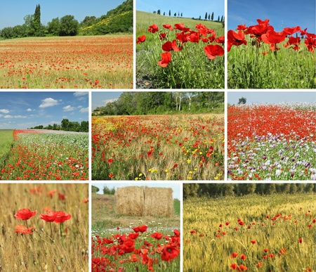 italian village: fields and meadows with flowering poppies in Tuscany, Italy, Europe Editorial