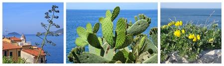 images of Mediterranean, Tellaro village ,Liguria, Italy, Europe Stock Photo - 12839192
