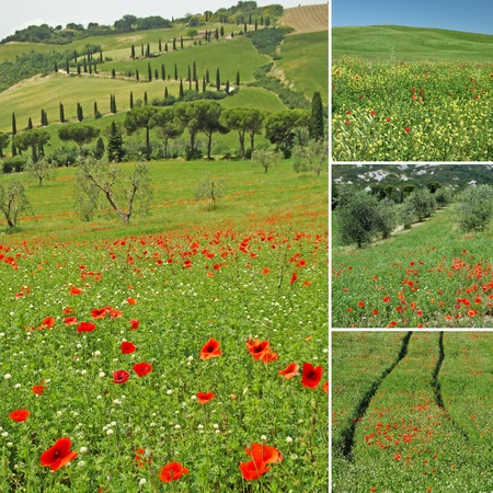 toscana: colllage with tuscan landscape, La Foce in The Val d Orcia, UNESCO World Heritage site, Italy, Europe