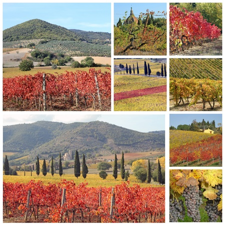 collage with fantastic landscape of tuscan vineyards in autumn, region of famous red italian wine Brunello di Montalcino, Italy, Europe photo