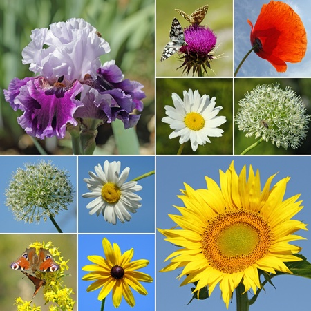 collage with rural flowers photo