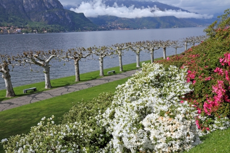 Gardens of Villa Melzi d'Eril  in Bellagio and landscape of Lake Como, Lombardy, Italy, Europe photo