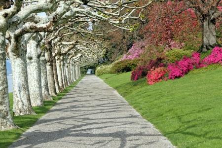 bellagio: Alley in  Gardens of Villa Melzi d Stock Photo
