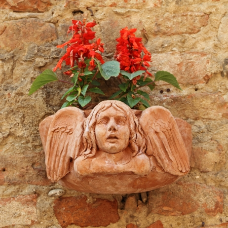toscana: terracotta flowerpot with angelic relief and Salvia splendens  Scarlet Sage, Tropical Sage   flowers on antique wall