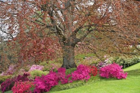 bellagio: historic gardens of Villa Melzi in Bellagio, Lombardia, Italy, Europe
