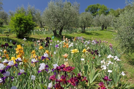 The Garden of Iris   Giardino dell photo