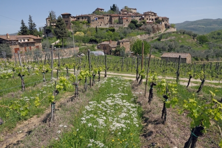 landscape with vineyards in spring and old village on hill, Montefioralle, Greve in Chianti, Tuscany, Italy, Europe photo