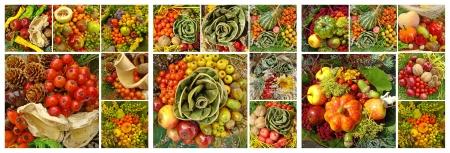 autumnal composition Stock Photo - 14586369