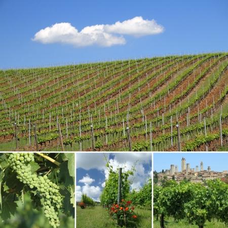 Collage mit Bildern von grünen Weinbergen im Frühjahr im toskanischen Region berühmt für Vernaccia von San Gimignano, Weißwein, Italien, Europa Standard-Bild - 14669548