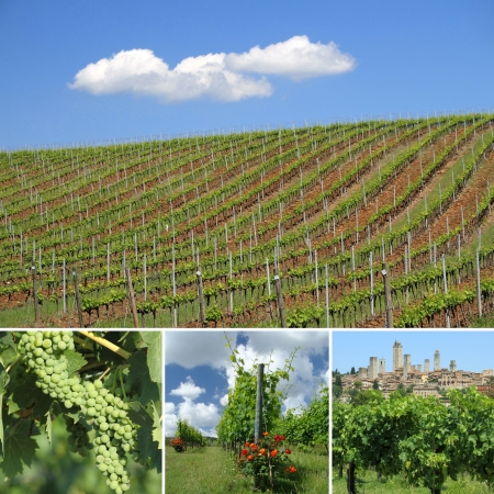 collage with images of green vineyards in spring in tuscan region famous for Vernaccia of San Gimignano, white wine, Italy, Europe photo
