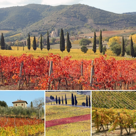 wine country: collage with fantastic landscape of vineyards in Tuscany in autumn, at horizon St. Antimo Abbey ,land of famous red italian wine Brunello di Montalcino, Italy, Europe Stock Photo