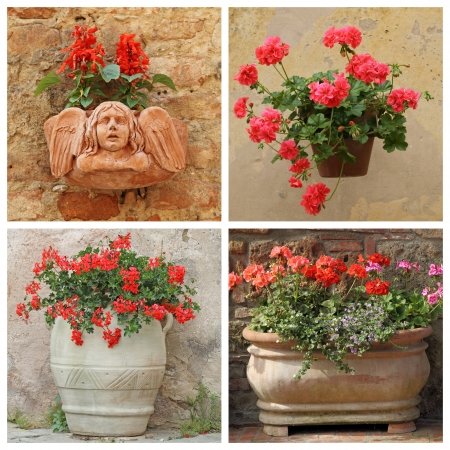 set of flowering red plants in rustic containers, Tuscany, Italy, Europe photo