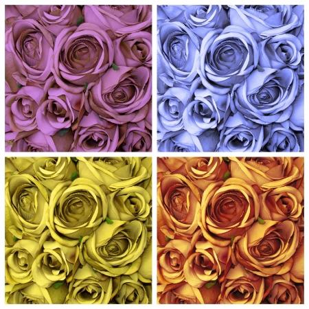 roses set photo