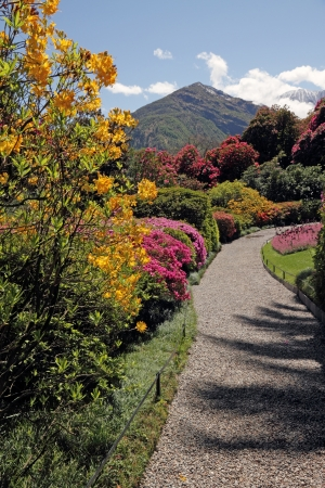 azaleas: fantastic landscape with azaleas and rhododendrons in  garden of Villa Carlotta on lake Como, Tremezzo, Lombardy, Italy, Europe Stock Photo