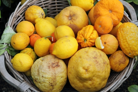 basket with variety of fruits  of citrus family (  Rutaceae ) on exhibition in Florence, Tuscany, Italy, Europe Stock Photo - 14894399