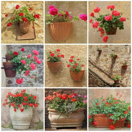 pelargonium: collage with geranium flowers in vintage  containers, images from Tuscany, Italy, Europe