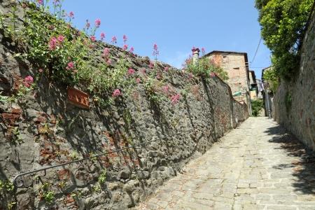 vintage: pittoreske landelijke geplaveide straat en Stonewall met bloeiende Centranthus ruber (ook wel valeriaan of rood valeriaan) in Collodi dorp, Pinocchio geboorteplaats, Toscane, Italië, Europa