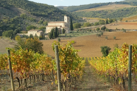 antimo: spectacular  landscape with autumnal vineyards and Saint Antimo Abbey and hills on background