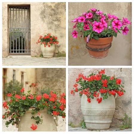 petunia: cosy tuscan nook - collage