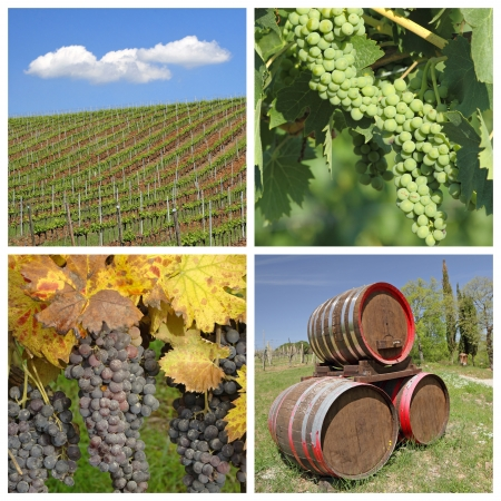 winemaking: wine collage