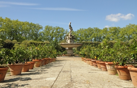 medici: alley with citrus plant in terracotta pots and at the background fountain of the Ocean on the Isolotto in the Boboli Gardens - historical Medici gardens in Florence, Tuscany, Italy, Europe Stock Photo