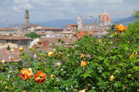 giardino: flowering orange roses  with panoramic view of old  town of Florence, Italy, Giardino delle rose ( Garden of Roses) , Firenze, Italy, Europe Stock Photo