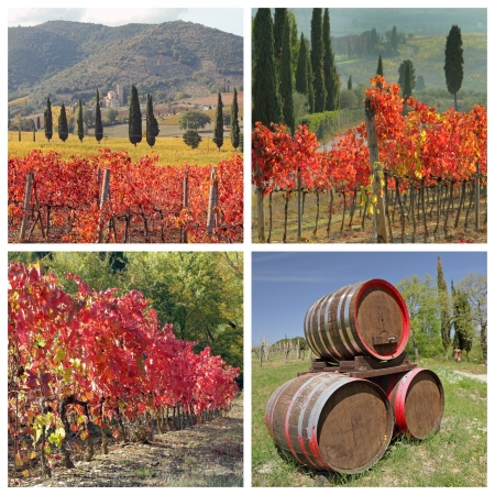 montalcino: collage with images of autumnal purple vineyards in region of famous wine  Brunello di Montalcino, Tuscany, Italy, Europe