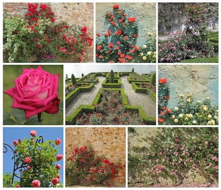 composition with images of roses in garden photo