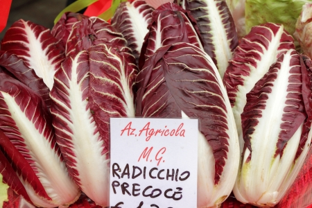 chicory: Radicchio Rosso di Treviso, variety  precoce, type of italian chicory . Wine-red leaves, and bone-white ribs.  IGP (Indicazione Geografica Protetta) status
