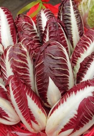 chicory: Radicchio Rosso di Treviso, variety precoce   Wine-red leaves, and bone-white ribs  IGP  Indicazione Geografica Protetta  status Stock Photo