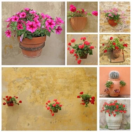 greek pot: collage con i fiori in vasi di terracotta rustico, Italia