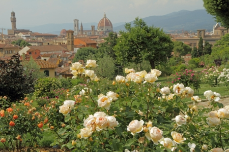 giardino: flowering rose  in Giardino delle Rose  with panoramic view of renaissance town of Florence, Italy, Europe