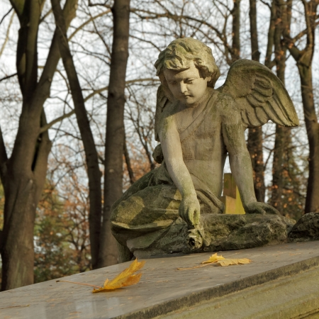 angel with rose  - gravestone on  Rakowice cemetery in Krakow , Poland, Europe photo