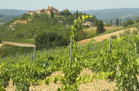 landscape with tuscan vineyards and medieval village Certaldo on hill, town of  Boccaccio,Italy, Europe Stock Photo - 18339707