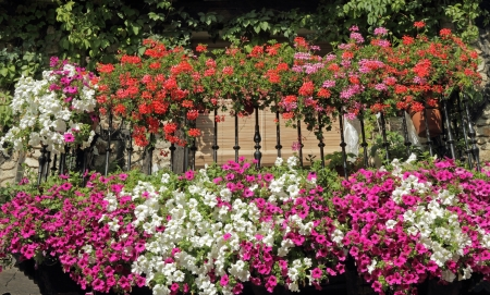 balcony with flowering plants, Spain, Europe photo