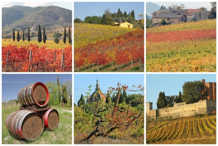 postcard with fantastic images  with tuscan vineyards in autumn,  Italy, Europe photo