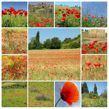 rural landscape with red poppies - collage , Italia, Europe photo