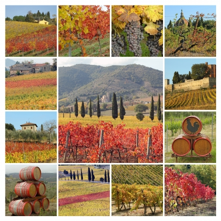 autumnal tuscan vineyards collage, Italy, Europe photo