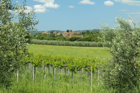 tuscan landscape with green vineyards and etruscan village Sovana, Sorano, Tuscany, Italy, Europe photo