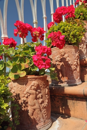 flowering red geranium in terracotta traditional vases on steps on balcony, Tuscany, Italy, Europe photo