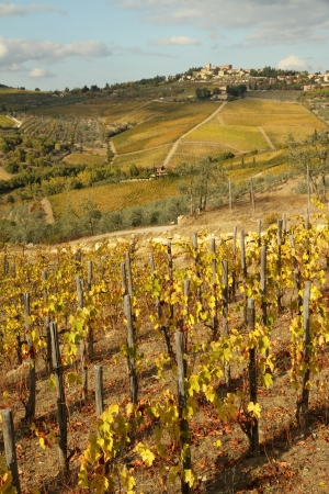 tuscan landscape with autumnal vineyards and borgo Panzano in Chianti o hill, Tuscany, Italy, Europe