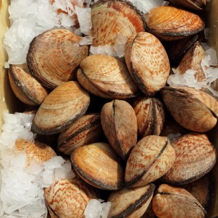 molluscs: edible clams on belgian fish market, Brussels, Belgium, Europe