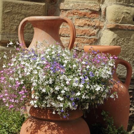 greek pot: multicolor lobelia fiori in vasi di creta retrò, Toscana, Italia, Europa