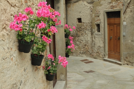 pelargonium: pink geranium flowers on wall in small old town in Tuscany, Anghiari, Italy  Stock Photo