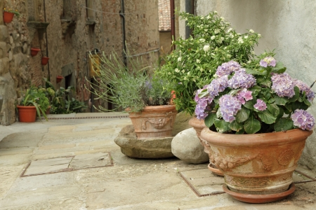 flowering plants in decorated ceramic vases on tuscan narrow street, Anghiari small town, Italy photo